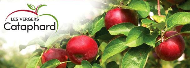vergers-cataphard-pomme